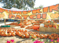 Wilshire Rotary Pumpkin Patch remains a fall tradition