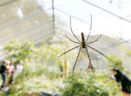 Reservations for NHM's Spider Pavilion open Oct. 14