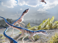Triassic find by Dino Institute linked to pterosaurs