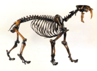 Volunteers can digitize past research at the La Brea Tar Pits