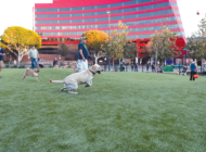WeHo off-leash dog area leaps forward