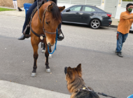 Mounted patrol saddles up on Melrose Avenue