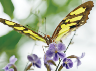 NHM butterfly exhibit opens