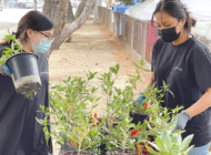 Join students to help beautify Fairfax HighSchool's campus
