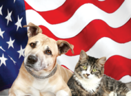Owners cautioned about dangers of fireworks to pets