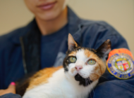 Pet adoption incentives offered  to those who are vaccinated