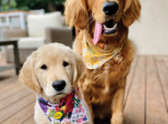 World Dog Day festival returns to WeHo